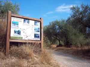chemin olivier